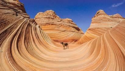 Earth day Arizona