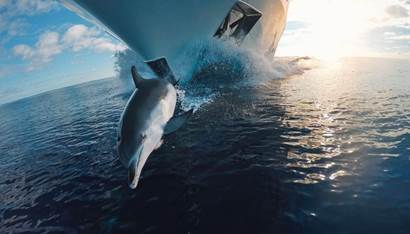 Earth day delfin
