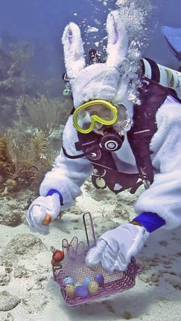 Spencer Slate, garbed as a scuba-diving Easter bunny places eggs on the sand in the Florida Keys National Marine Sanctuary Tuesday, April 19, 2011, off Key Largo, Fla. An Easter tradition in the Florida Keys, Slate's Atlantis Dive Shop stages an underwater egg hunt on Easter Sunday that serves as a fundraiser for a local children's charity. Real eggs and nontoxic colorings are used to avoid negative ecological impacts. FOR EDITORIAL USE ONLY (Bob Care/Florida Keys News Bureau/HO)
