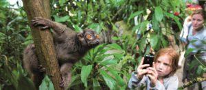 RandersRegnskov_Pige fotograferer brun lemur