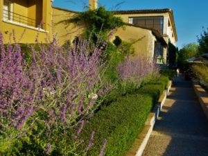 DUFT: Hagen er full av nydelige vekster som sender doser av ferielukter til oss.
