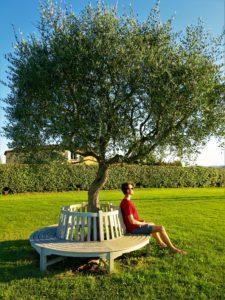 VAKKERT:Oliventreet er mange hundre år gammelt.