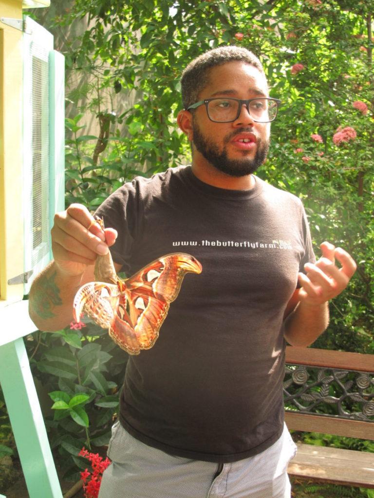 Therwin i sommerfuglparken forteller den fascinerende historien om sommerfuglenes liv.